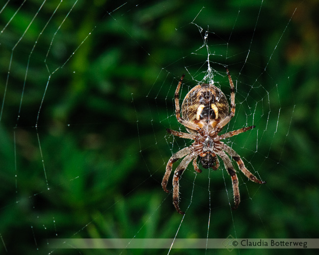 Spiders Series #3