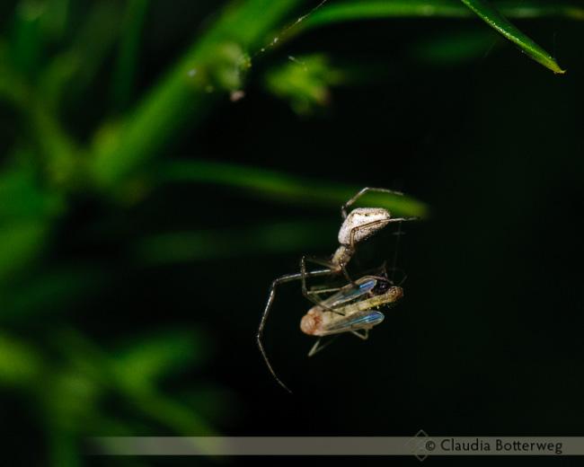 Spiders Series #2