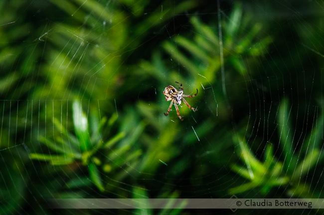 Spiders Series #6