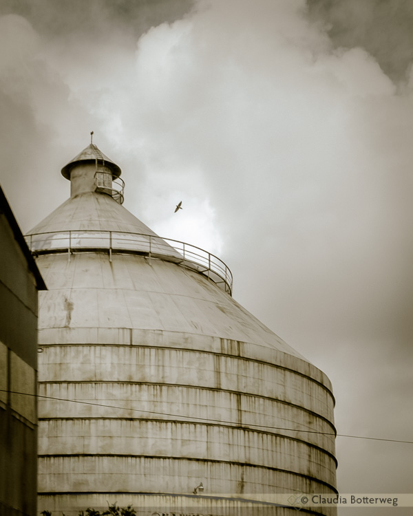 Old Silo with Bird